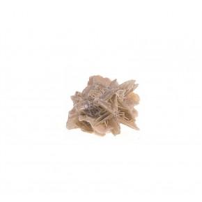 Rosa del Desierto 4 cm